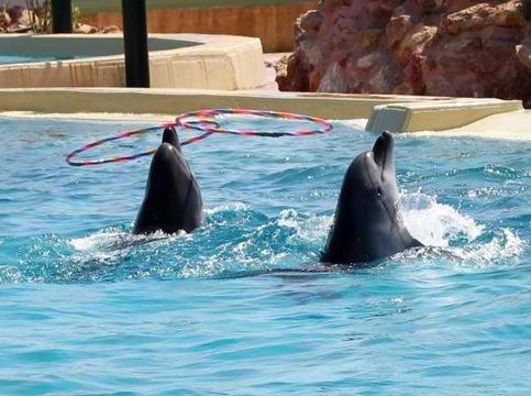 DelfiniaAttiko