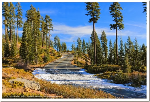 140118_MtShasta_afternoon_bunny_flat_road3
