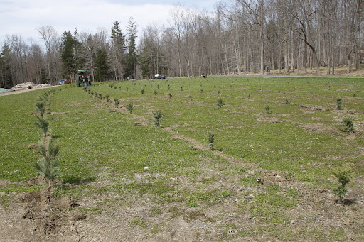 On that day they planted 5-year-old saplings of white pine, Frasier fir, Caanan fir, Norway spruce, and blue spruce.  Do you recollect how small the trees were back in April of '09?  Maybe this photo will jog your memory.