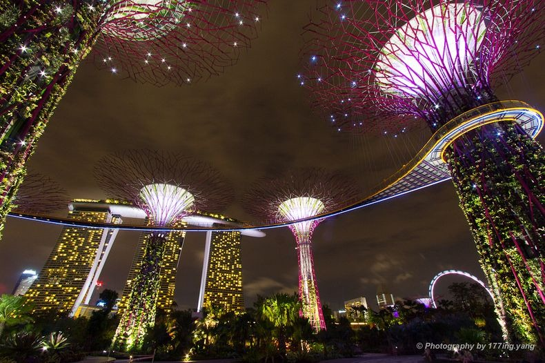 supertrees-singapore-4