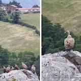 Pas trop farouches les vautours