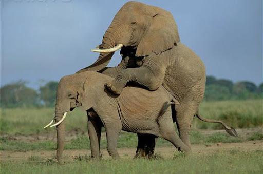 animals_mating_2_-animais-transando-animais-fazendo-sexo-8.jpg