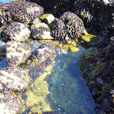 Big tide pool
