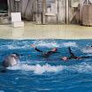 Boudewijn Seapark-061.JPG