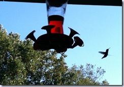 hummingbirds one