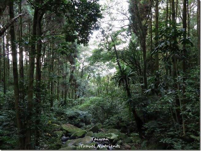 三峽熊空茶園 (29)