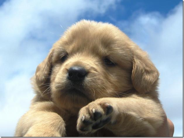 fotos de perritos imagenesifotos.blogspot (10)