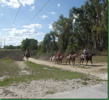Did you know Florida is BIG horse country?