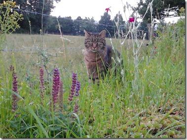 スクービーという名の猫