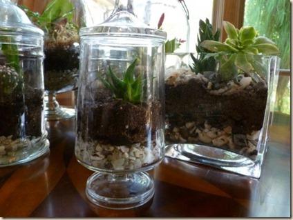 terrarios vidro