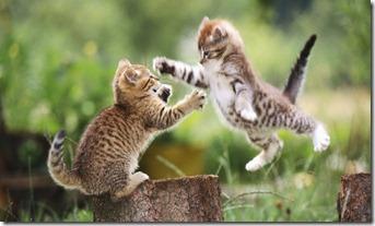 sensi-sviluppati-gatti