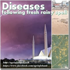 Diseases following fresh rainy spell