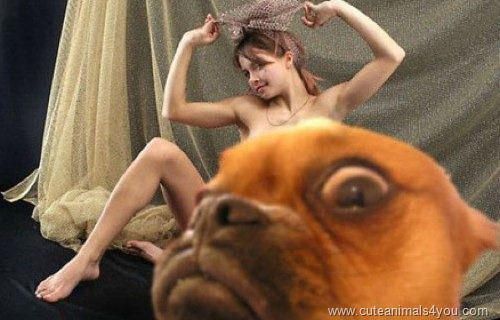 50_Funniest_Animal_Photobombs_Of_All_Time_16
