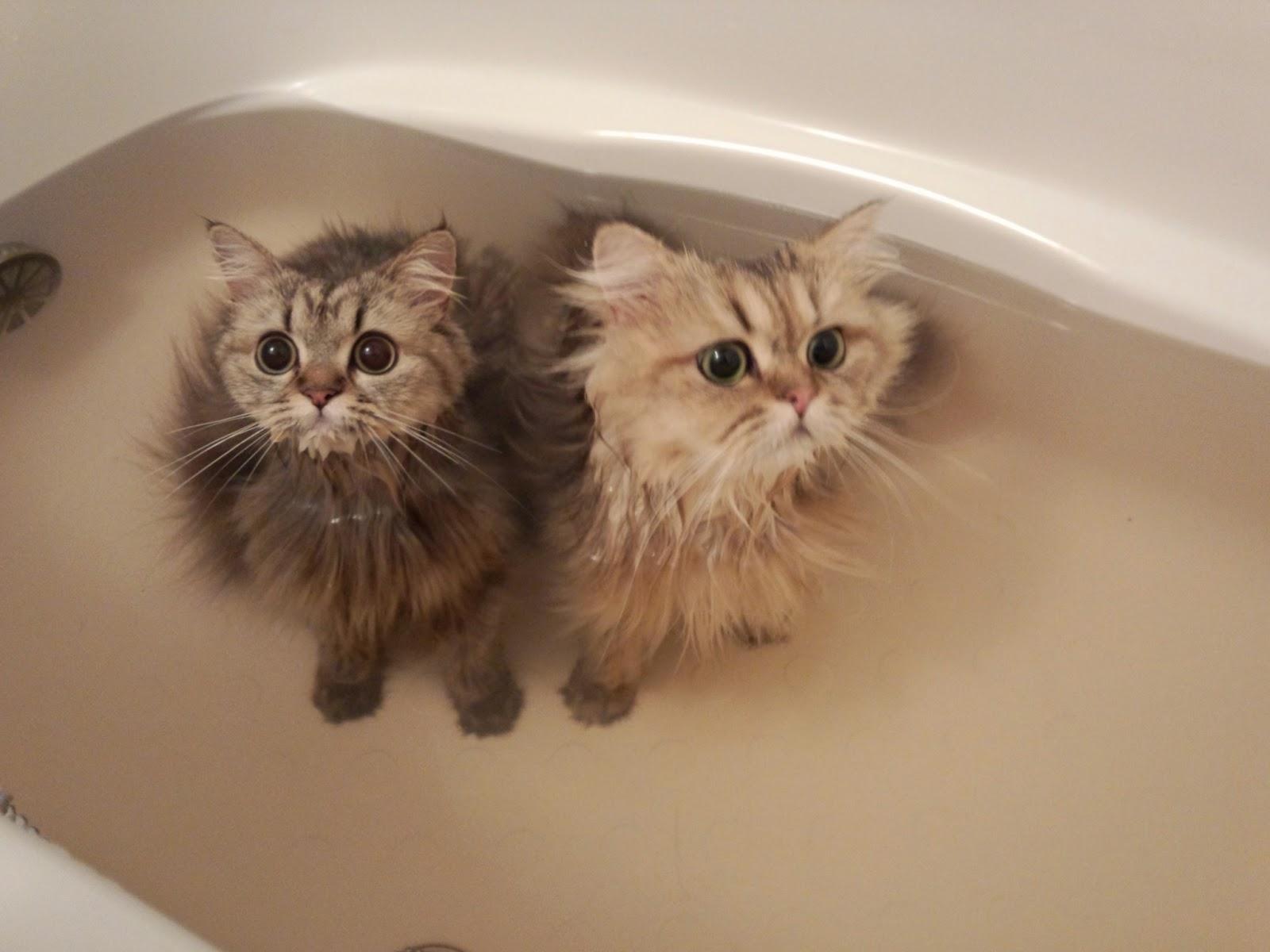 ... 猫の画像が可愛い 【お風呂猫