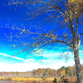 Before Winter by Sandie Lawler - Novices Only Landscapes ( clouds, beautiful skies, 2014, autumn, gordon college, trees, massachusetts )