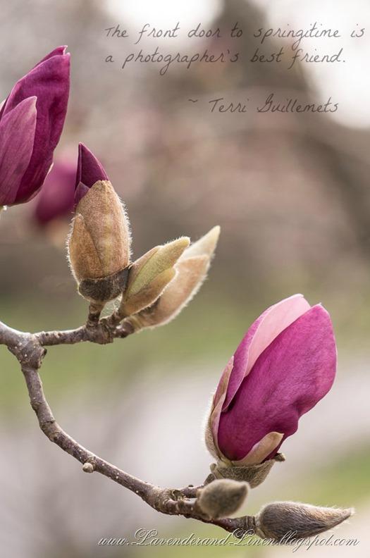 Spring at LavenderandLinen.blogspot.com