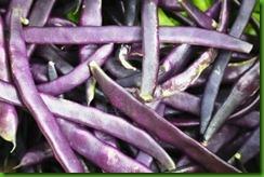 Beans Blauhilde