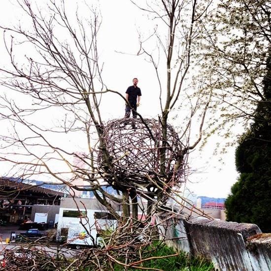 Ninho gigante de Hannes Wingate 02