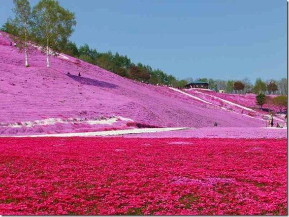 pink-park-japan-15