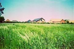 Summer-Barley-5---XPRO