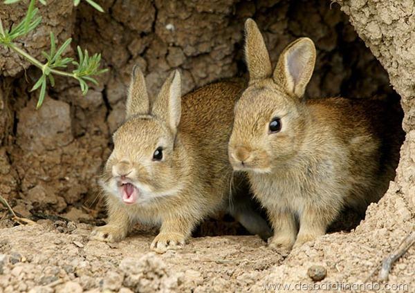 animais-bocejando-bocejar-desbaratinando (4)