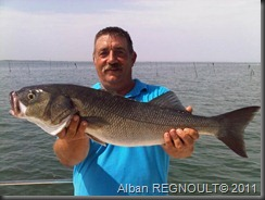 SMITH_dragonbait_sea bass_bar_4