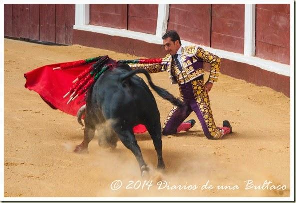 Toros 2014 (1)-16