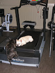 On second thought, perhaps you have the right idea.  I'm wiped from this workout!  Move over, girlfriend!