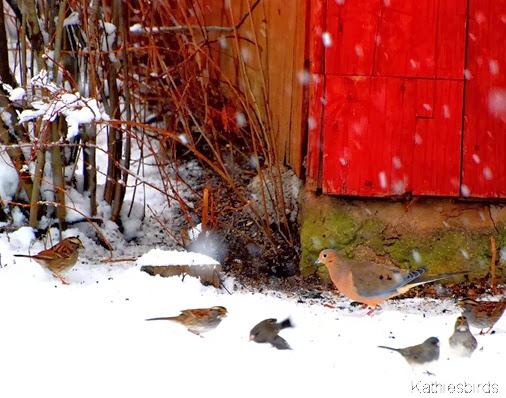 12-20-13 Winter birds-AFF11