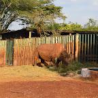 Maxwells Gehege, Sheldrick Wildlife Trust © Foto: Susanne Schlesinger | Outback Africa Erlebnisreisen