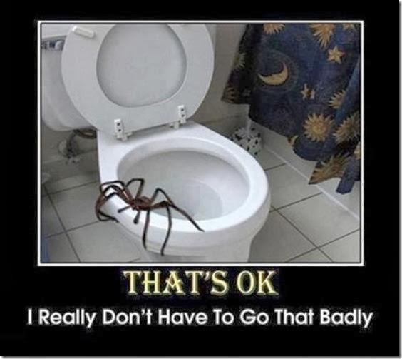 australia-scary-spiders-016
