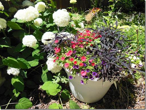 Drought Tolerant Container Garden