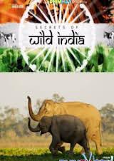 Bí Ẩn Thế Giới Hoang Dã Ấn Độ: Vương Quốc Loài Voi