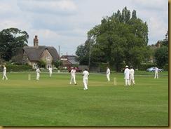 IMG_1499 Cricket