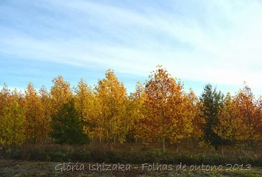 Glória Ishizaka - Folhas de Outono 27