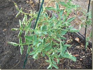 fall garden planted 005