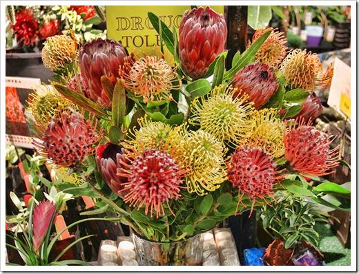 120321_SF_Flower Garden_Show_204