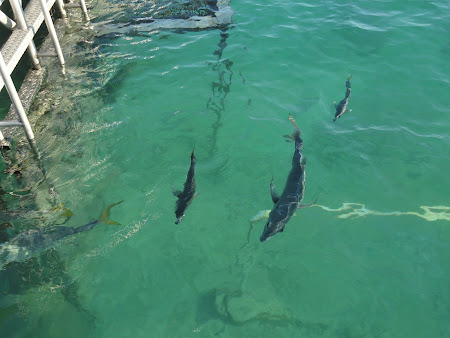 delfini XelHa Mexic