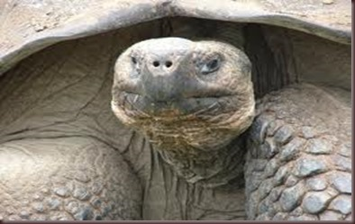 Amazing Animals Pictures Pinta Island tortoise (3)