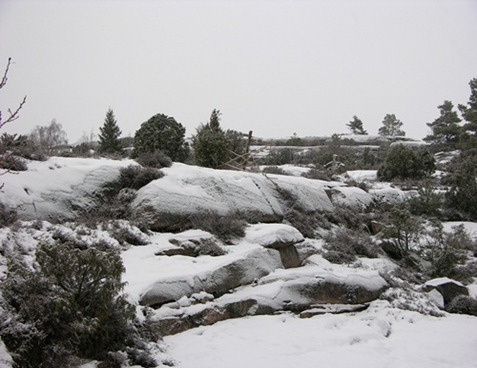 1 snöigt