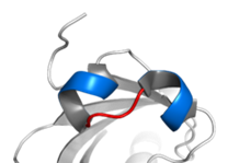 helix loop helix