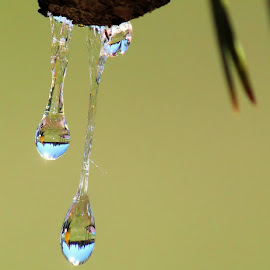 by Julie Lennick - Nature Up Close Natural Waterdrops
