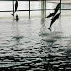 Shedd Aquarium - Dolphin Show