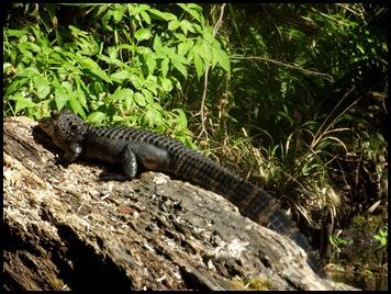 Wekiwa Springs State Park (154)