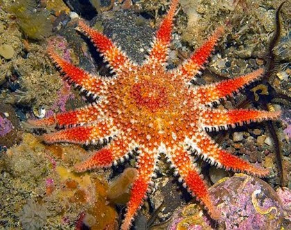 Amazing Pictures of Animals, Photo, Nature, Incredibel, Funny, Zoo, Starfish, Sea Stars, Asteroidea, Alex (1)
