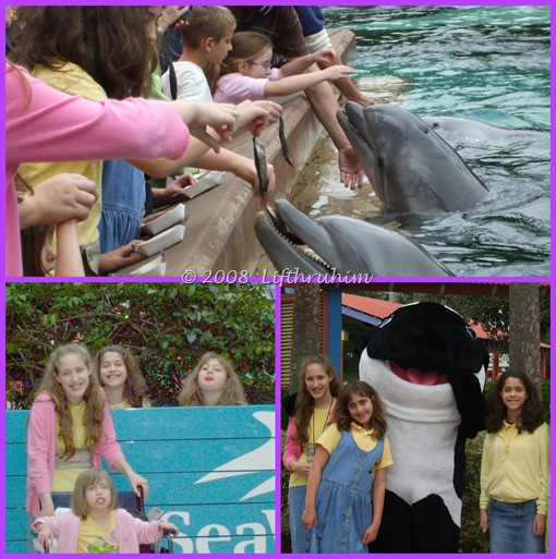 Seaworld Collage 2
