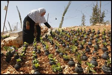 Dai lacrimogeni nascono fiori.. (4)