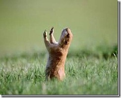 gopher praying