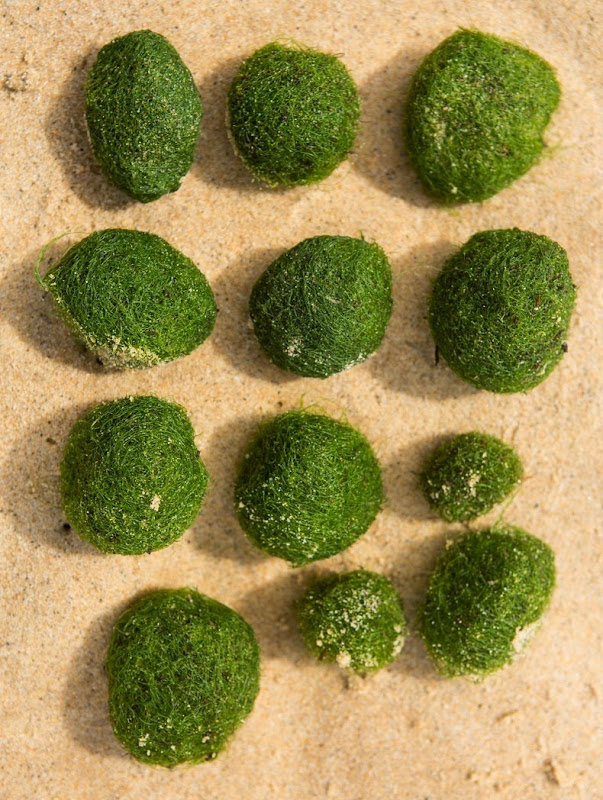 marimo-moss-balls-10