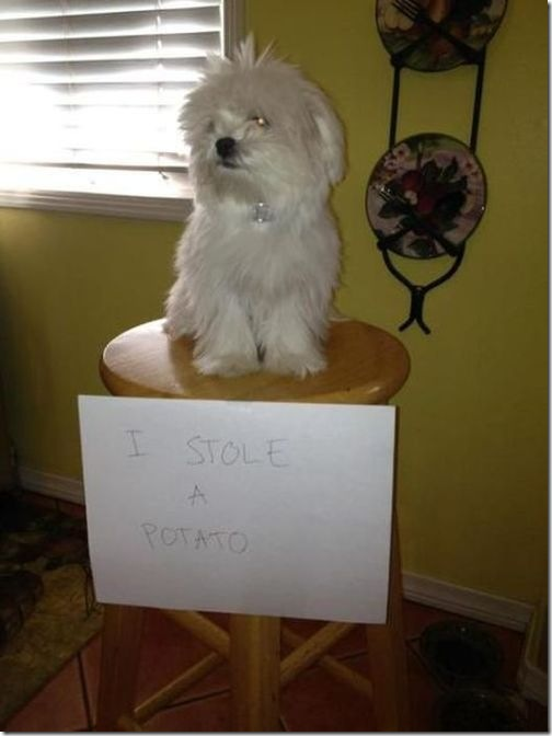 dog-shaming-bad-41
